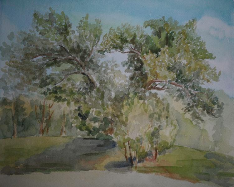 Этюд. Раскидистое дерево.