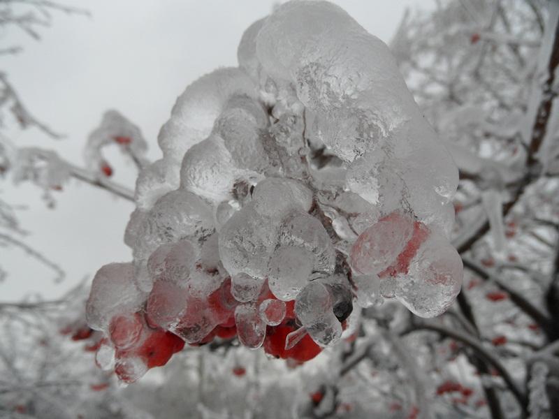 Ледяная ягода