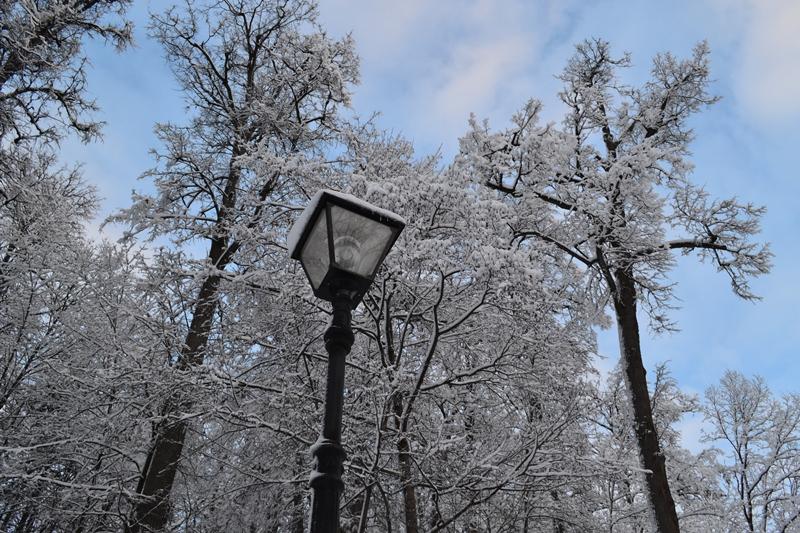 Фонарь, деревья...