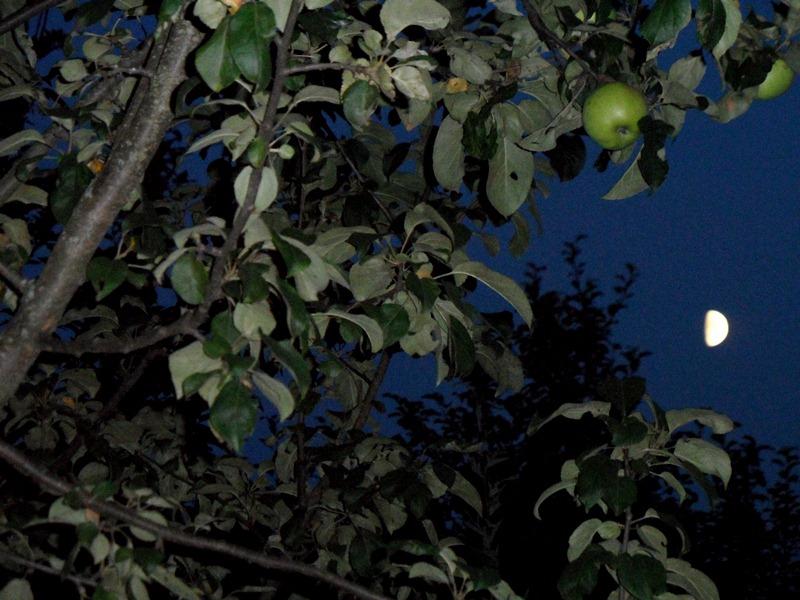 Яблоки в ночи